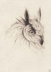 owl animals animal bird wild vintage old owls pencil drawing