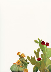 cactus cacti flowers floral desert tropical exotic nature plants summer collage paper red green yellow minimal pretty beautiful