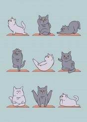 cat yoga fitness