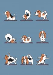 yogs dog gym