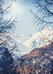 winter snow switzerland alps forest valley outdoors wanderlusst travel nature hiking summits mountain-peaks textures backlight dreamy