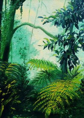 Rainforest Shadows