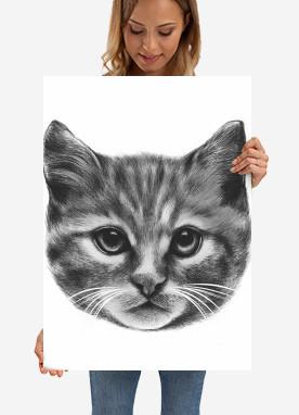 cats arts drawing illustrations