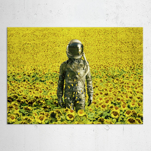 stranded in the sunflower fiel    by seam less
