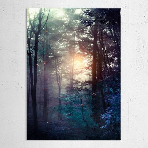 forest landscape nature magical Landscape