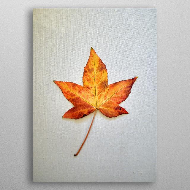 """ Autumn Star "" metal poster"