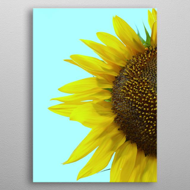 """"""" Sunflower Mint """" metal poster"""