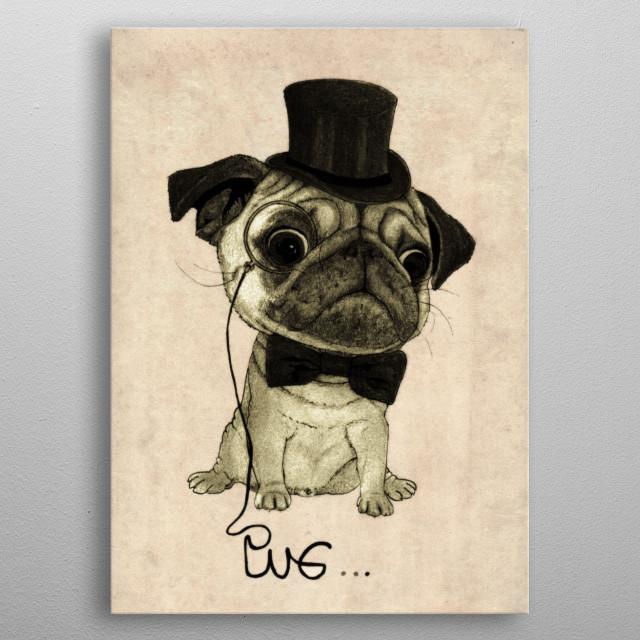 Pug. (Gentle pug). metal poster