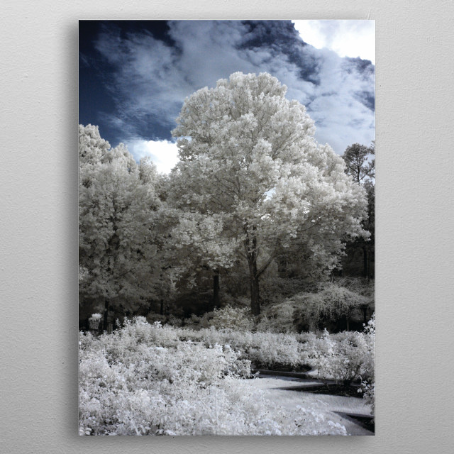 This image was taken in a field around Birmingham, AL. The image is an infrared photo, black and white is the classic version to view infrare... metal poster