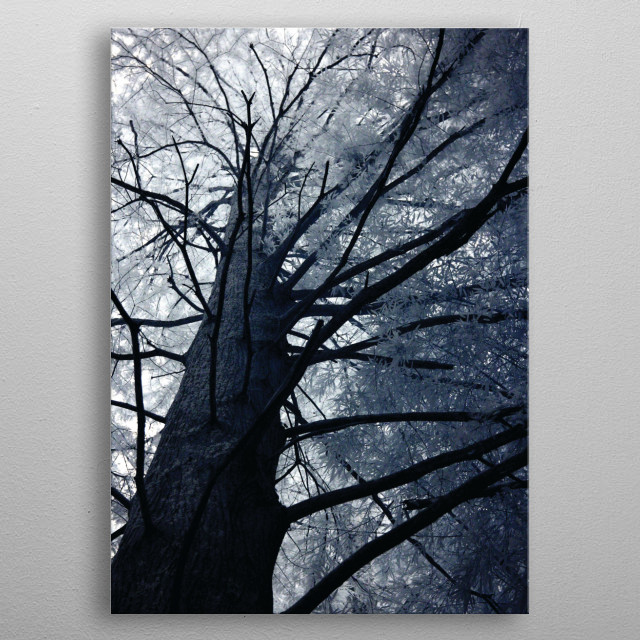 This image was taken with an infrared camera, this one of my favorite trees in our local botanical garden. I always try and take a picture of it when I am on a shoot. Maybe one day I will try and give it a climb? metal poster