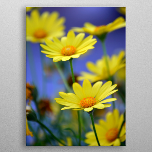 High-quality metal print from amazing Simply Nature collection will bring unique style to your space and will show off your personality. metal poster