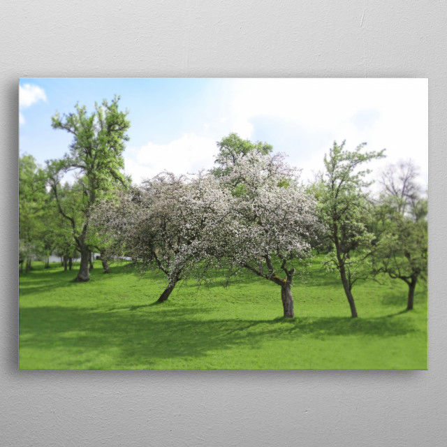 White Apple Blossoms and Austrian Landscape metal poster