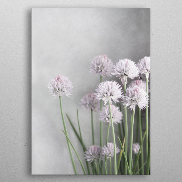 Fascinating  metal poster designed with love by brookeryanphoto. Decorate your space with this design & find daily inspiration in it. metal poster