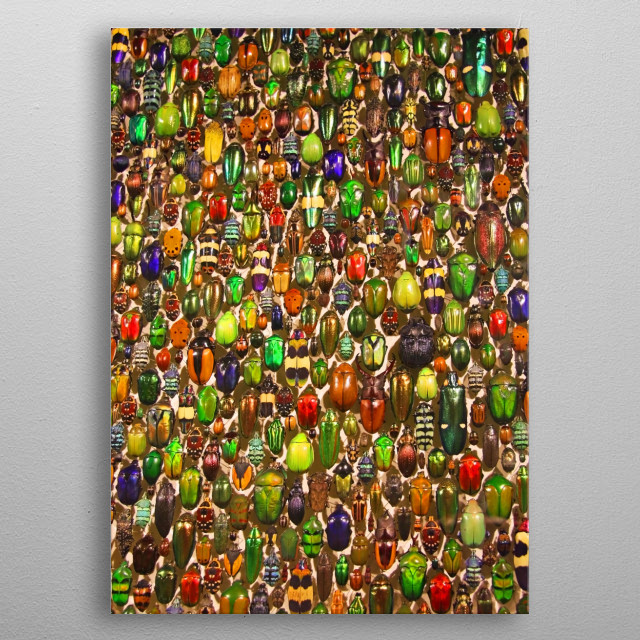 Colorful Beetles and Bugs metal poster