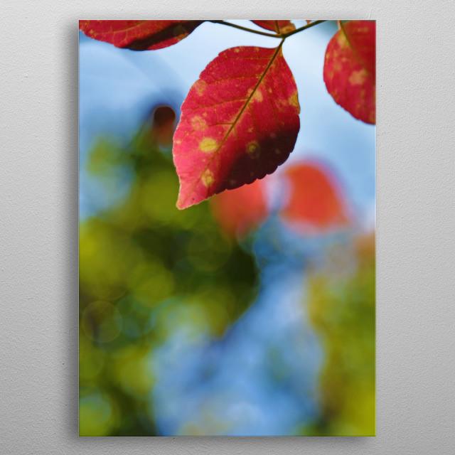 Vibrant Red Leaf metal poster