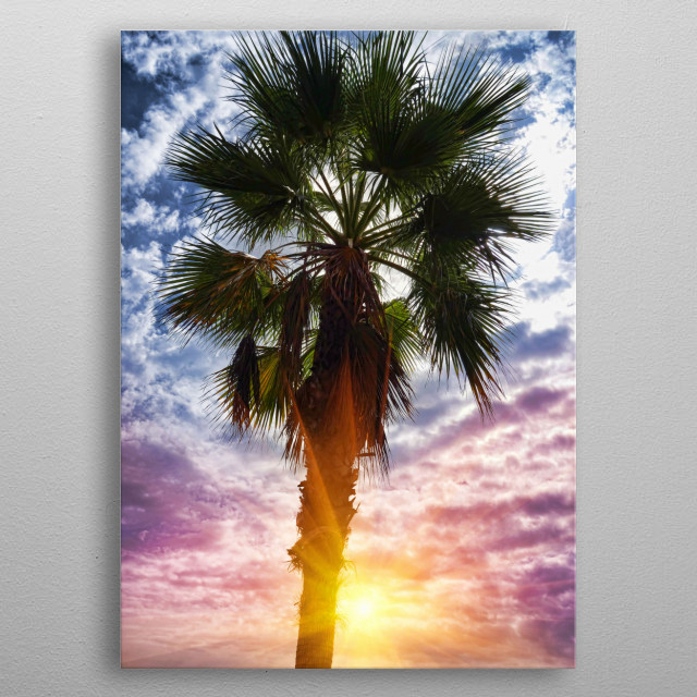 sunset between the palm trees by graphix displate metal posters