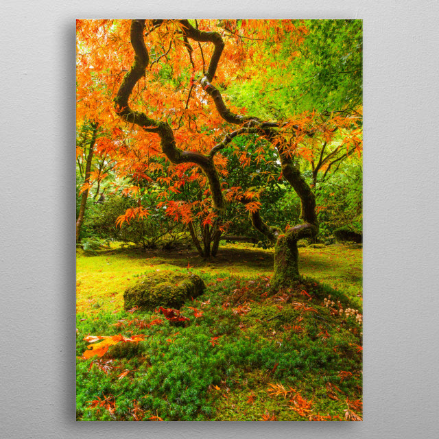 Japanese Maple In Fall metal poster
