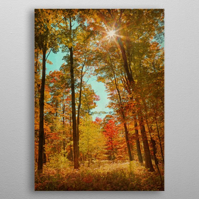 Sunlight streams through a vibrant forest in Fall. metal poster