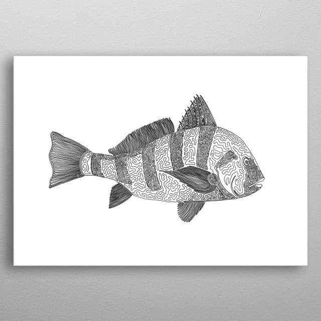black drum, one liner  The line starts in its eye and ends at the crown of his head, near where his rightmost top fin begins. metal poster