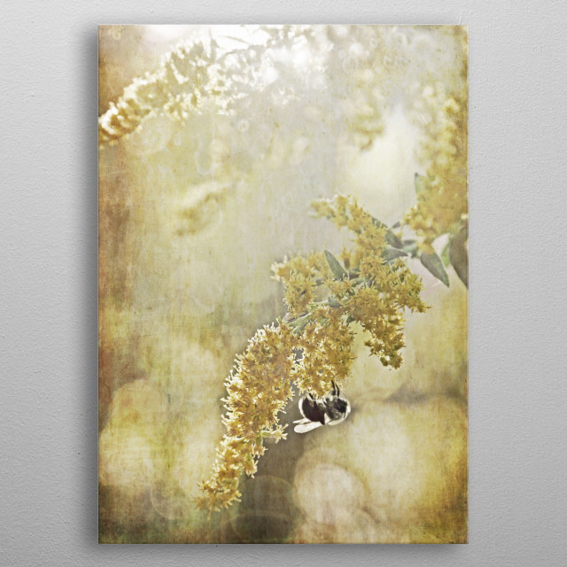 Bumble Bee On Golden Rod metal poster