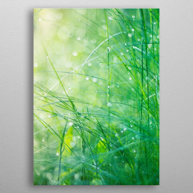 Close-up of morning dew covered grass leafs in sun light - texturized photograph metal poster