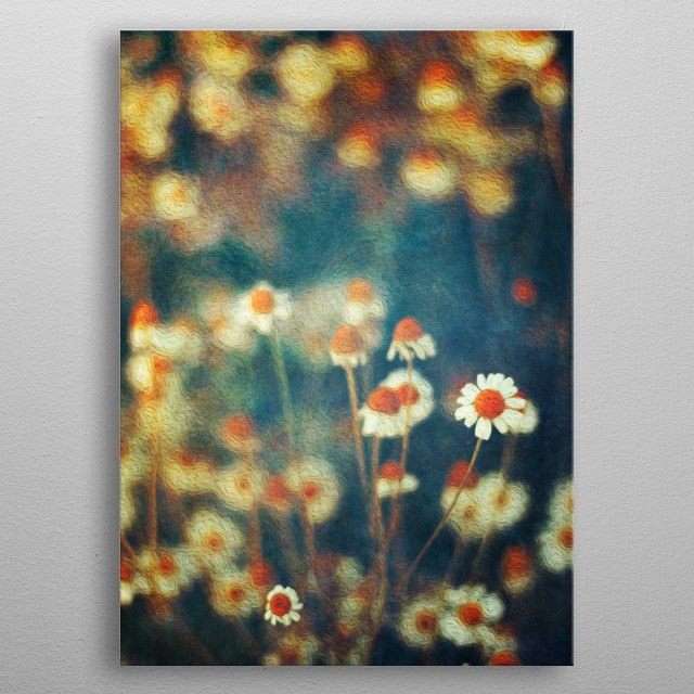 Painterly Camomille flowers a the fringe of a field - texturized photograph metal poster