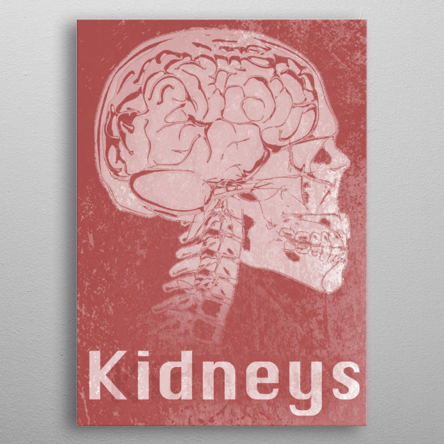 Kidneys metal poster