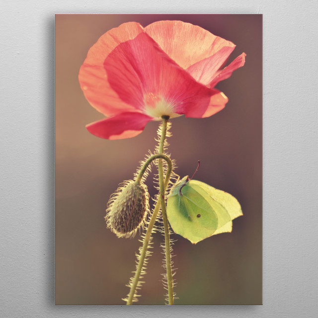 Red poppy metal poster
