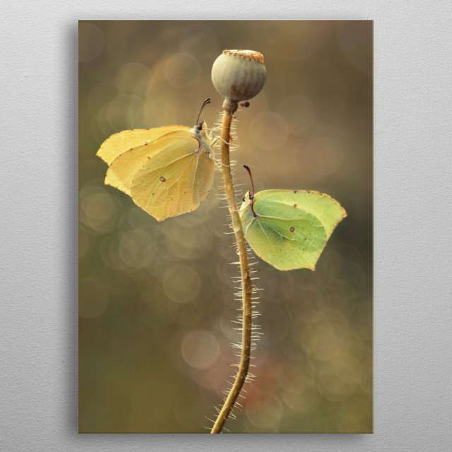 High-quality metal wall art meticulously designed by jablam would bring extraordinary style to your room. Hang it & enjoy. metal poster