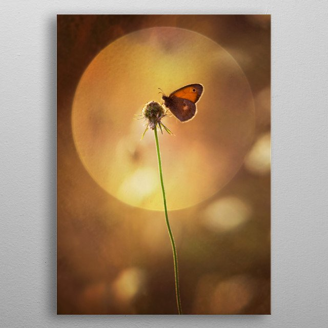Composition with small butterfly and the sun metal poster