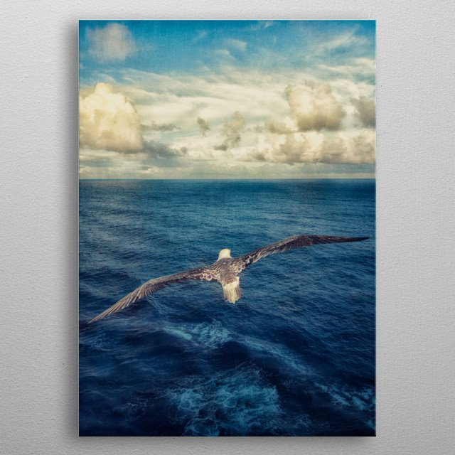 Red-footed Booby in-flight over the Coral Sea near Willis Island in Australia.  Taken while at sea from a cruise ship. metal poster