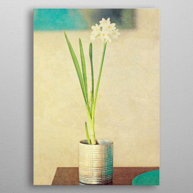 Painterly textured view of pap by susan gary metal posters painterly textured view of paper whites flowers grown metal poster mightylinksfo