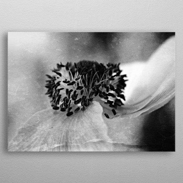 Two Left Just two petals left on this Anemone that has been blowing softly in the Mediterranean sea breeze.  Native to the Mediterranean regi... metal poster