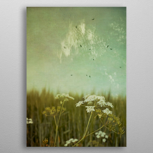 Common Yarrow in front of a field of barley - texturize... metal poster