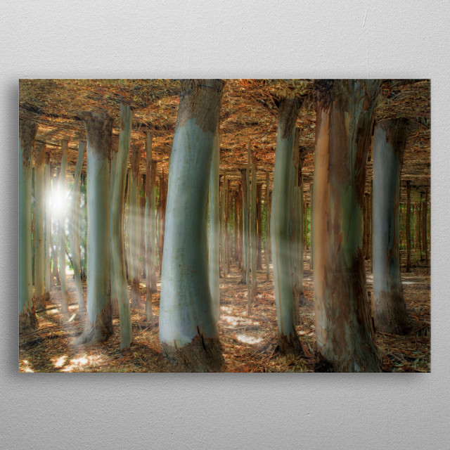 Surreal landscape with trees and sunrays. metal poster