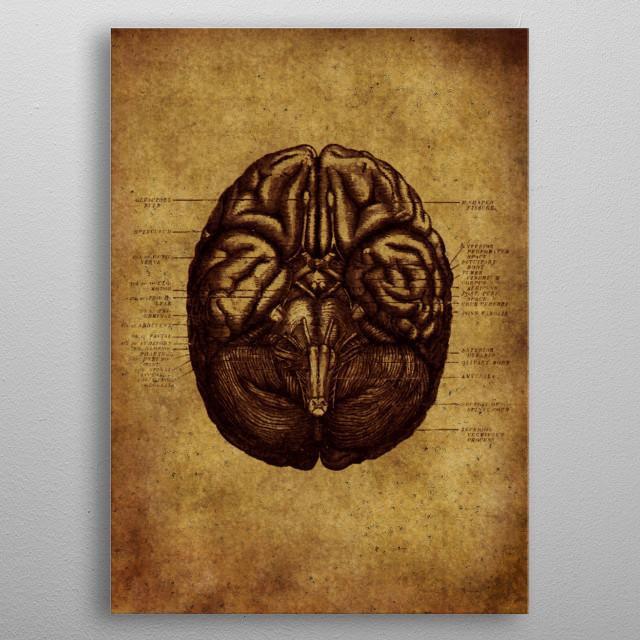 Anatomic 7 metal poster