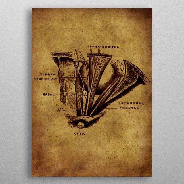 Anatomic17 metal poster