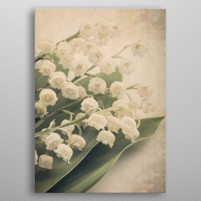 Lily of the Valley ii metal poster