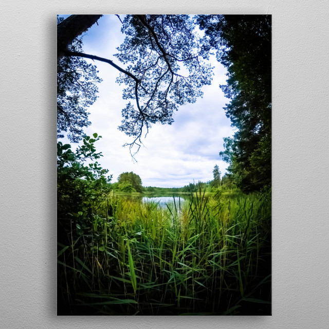 The trees on top and the reed on the bottom creates a nice frame in frame for the view overlooking the lake.  metal poster