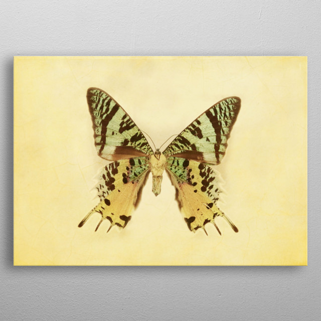 Vintage Inspired Pastel Yellow Aqua Blue Green Butterfly metal poster