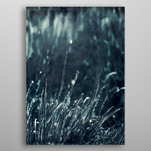 Morning dew on leaves of grass - texturized photograph metal poster