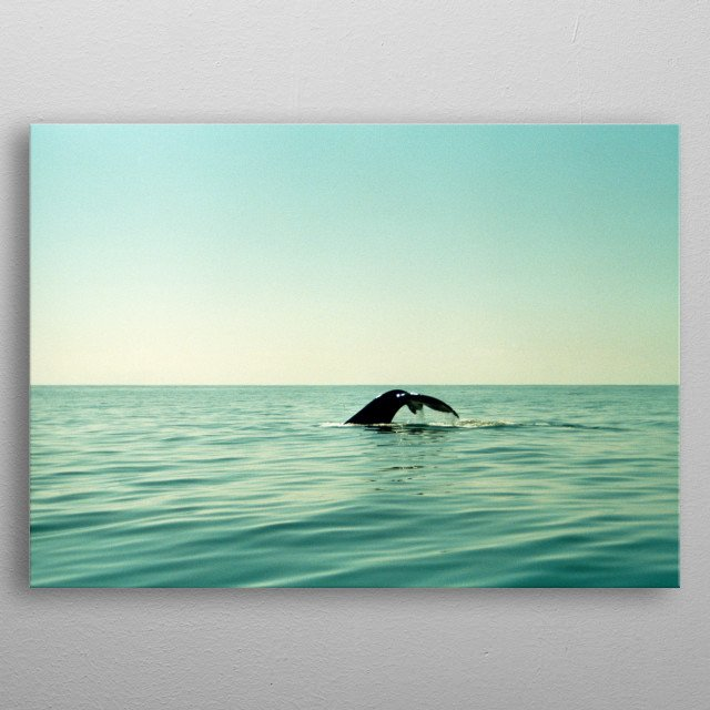 Whale metal poster