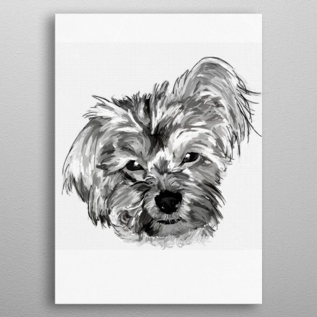 A dog breed who's gentle and fearless, the Maltese greets everyone as a friend. His glamorous coat certainly gives him an air of nobility. metal poster