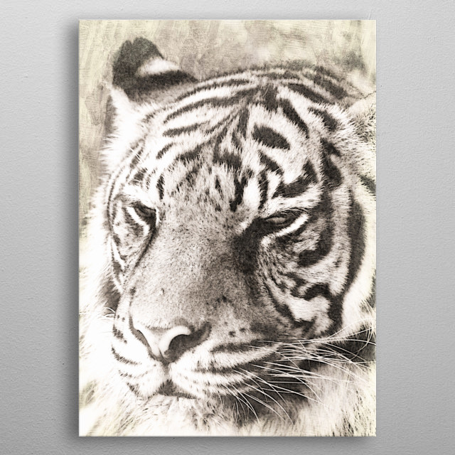 Mixed media art and photography of a Sumatran Tiger by Clare Bevan Photography. The Sumatran tiger is natively found only on the Indonesian i... metal poster