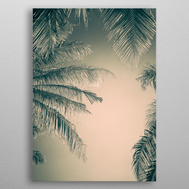 Frame of Coconut leafs metal poster