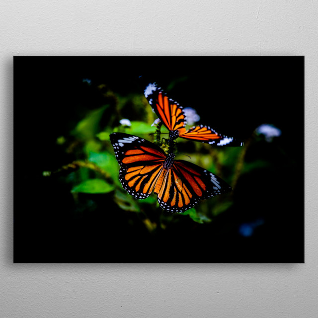 Monarch Butterfly Duo metal poster