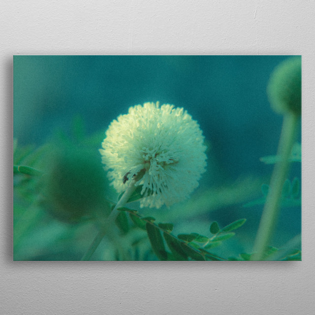 High-quality metal print from amazing Flower collection will bring unique style to your space and will show off your personality. metal poster