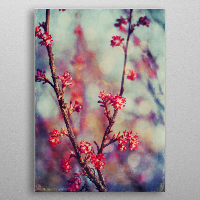 Blooming tree on a spring day - textured photograph metal poster