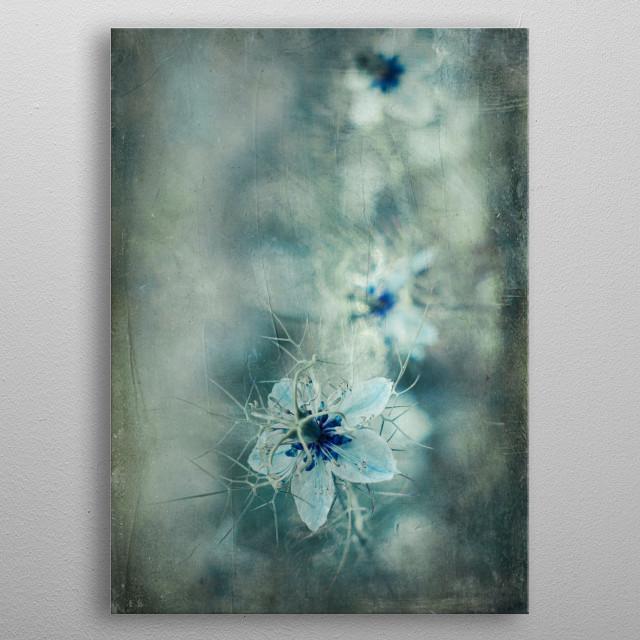 nigella damascena flowers metal poster