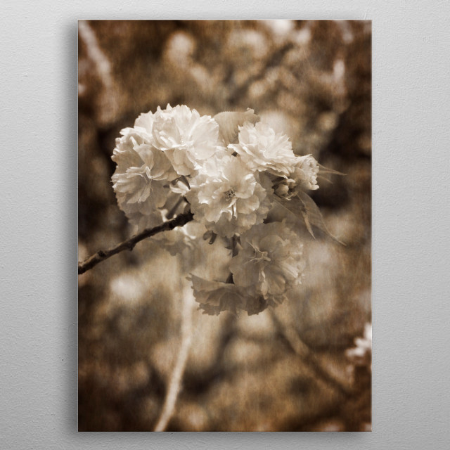flowers on the branches in spring metal poster